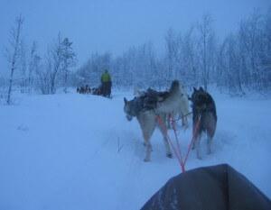 dog sledding in northern Lapland (photo © Ginny Prior)
